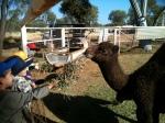Cassia Kindy Trip to the local Camel Farm